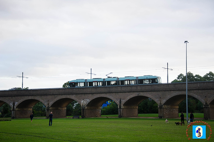 A tram running over the viaduct, which traverses the Federal Park.