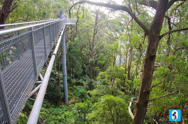 A view of the height of the Illawarra Fly Treetop Walk.